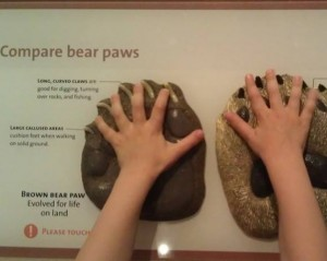 Natural History Museum Interactive exhibits for tiny hands