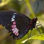 The Butterfly Pavilion at the Natural History Museum is free once a week